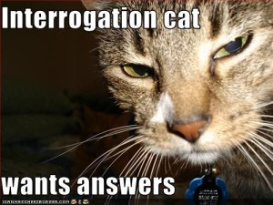 Interrogation cat wants answers
