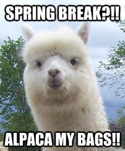 Spring Break Alpaca!