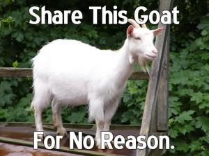 goat3-600x450